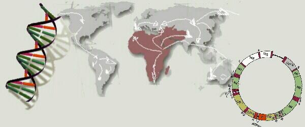 logomap